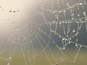 Краплини дощу на павутинці