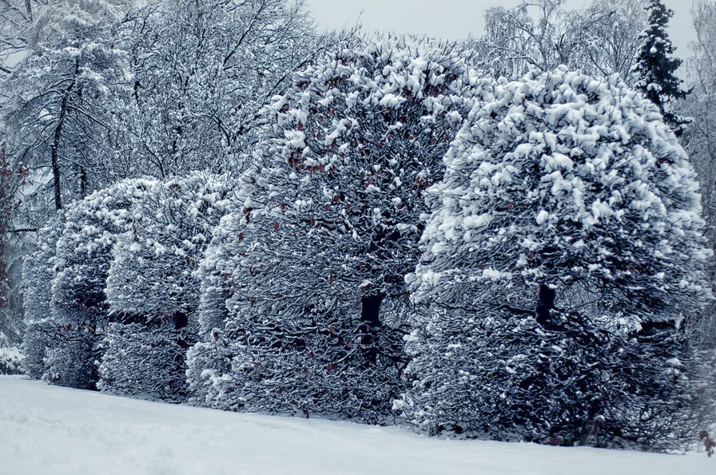 Зима для всього