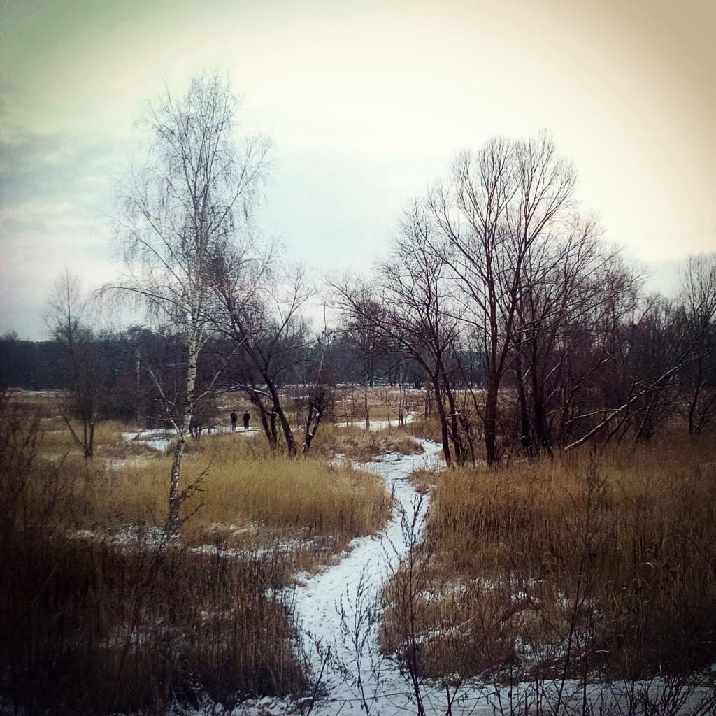 Зимова стежина