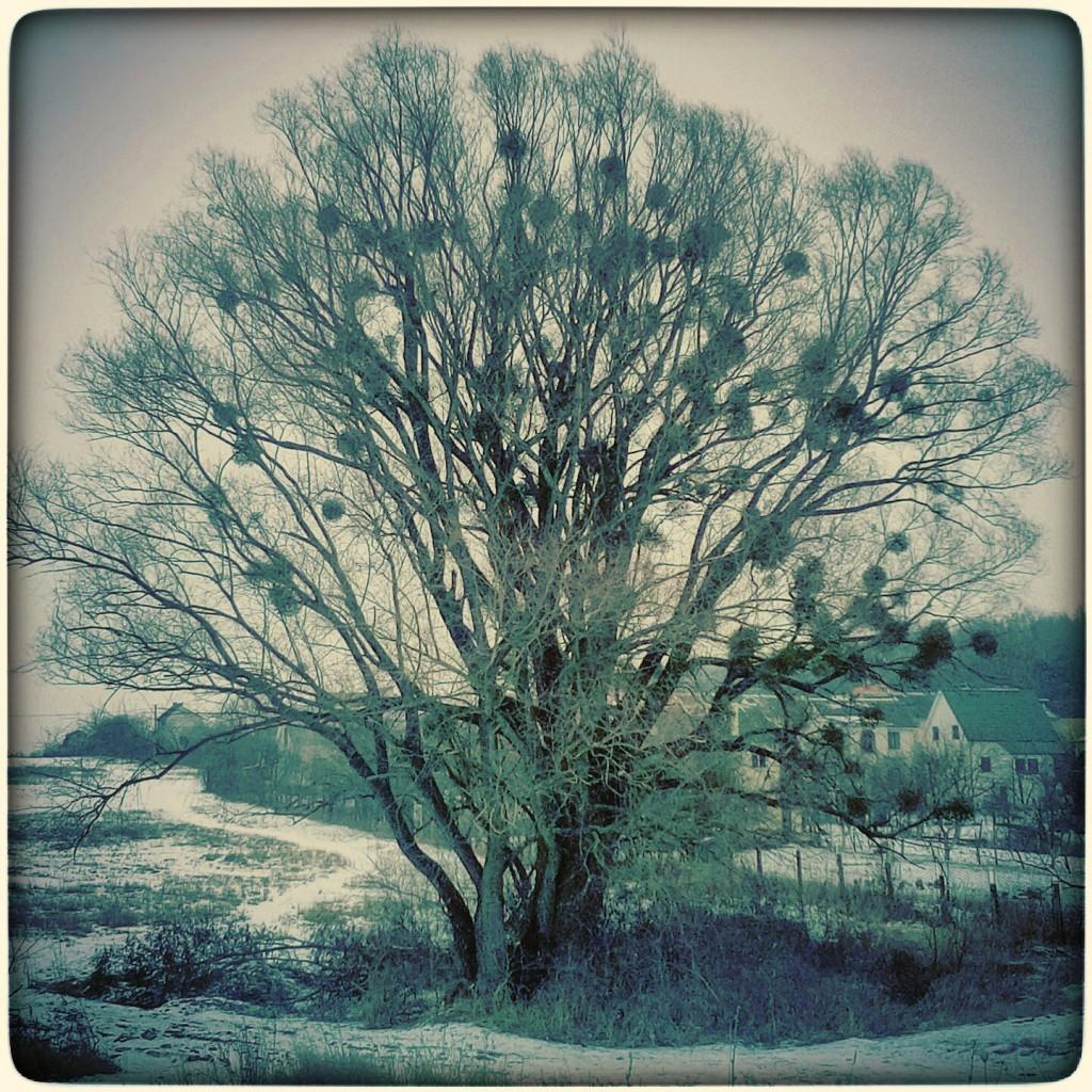 Дерево і паразити