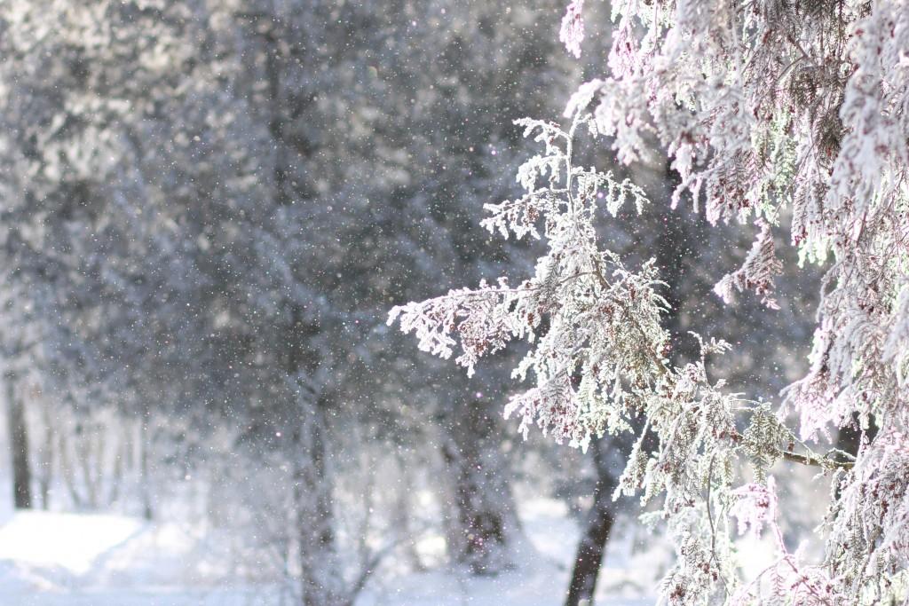 Сніжний мікс