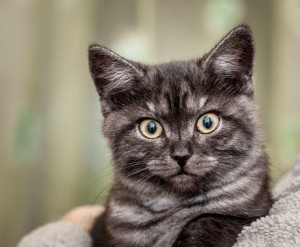 Юрій Лагно. Кіт