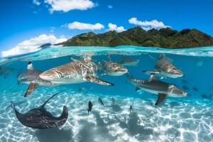 Фотозйомка мешканців підводного світу