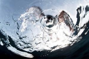 фотографувати під водою