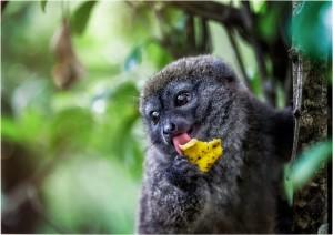 Природа Мадагаскару