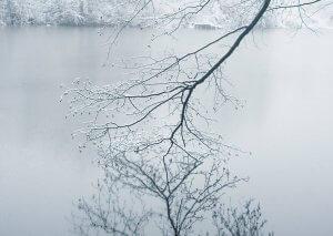 Гілка над водою