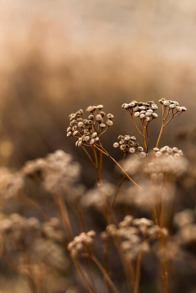 Останні осінні квіти