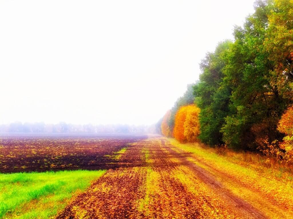 Геометрія осені