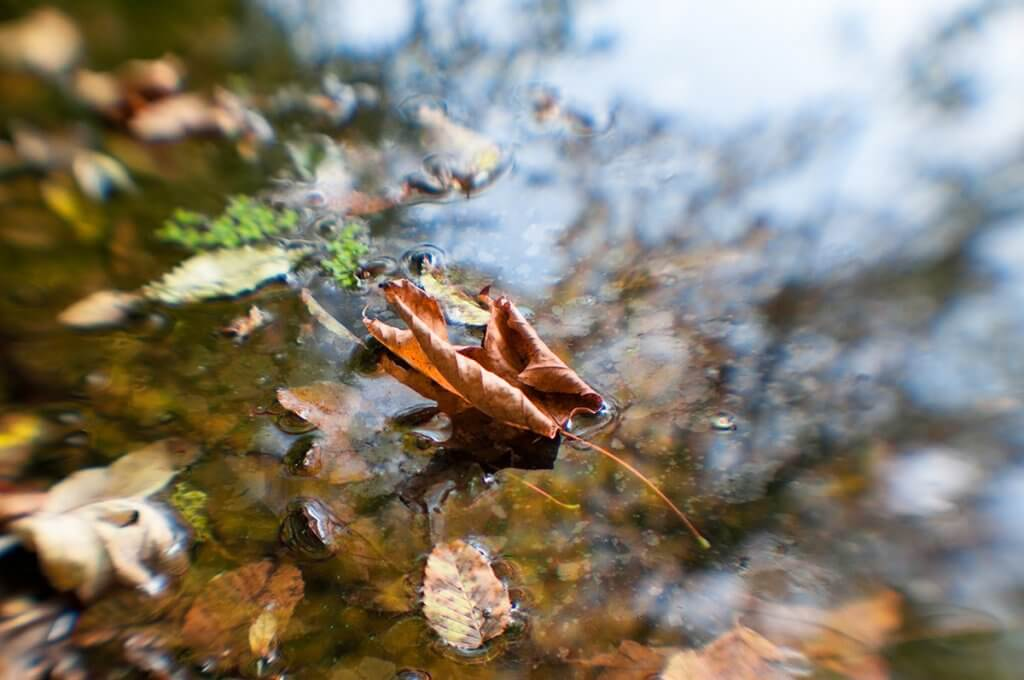 Листочок клена на воді.