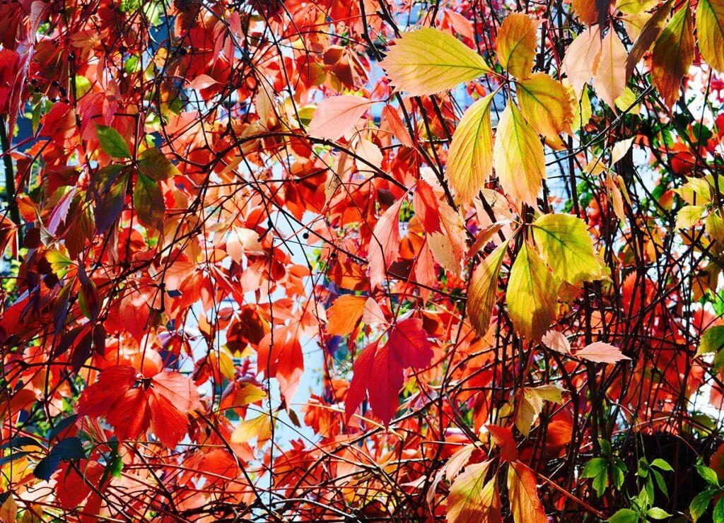 Пензлі осені
