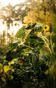 ...а за вікном осінь