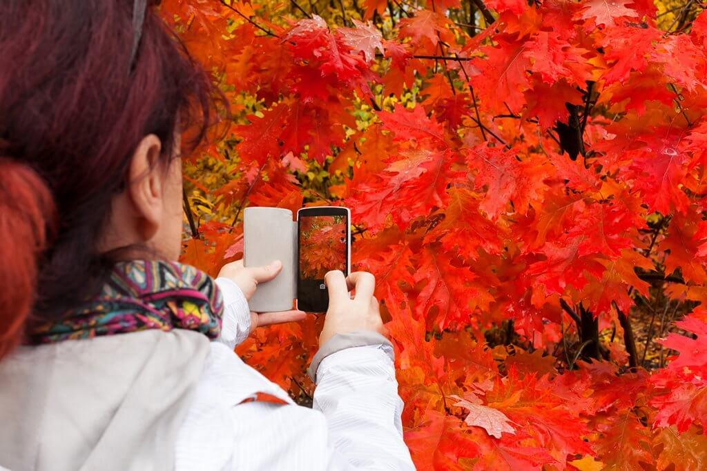 Багряні фарби осені