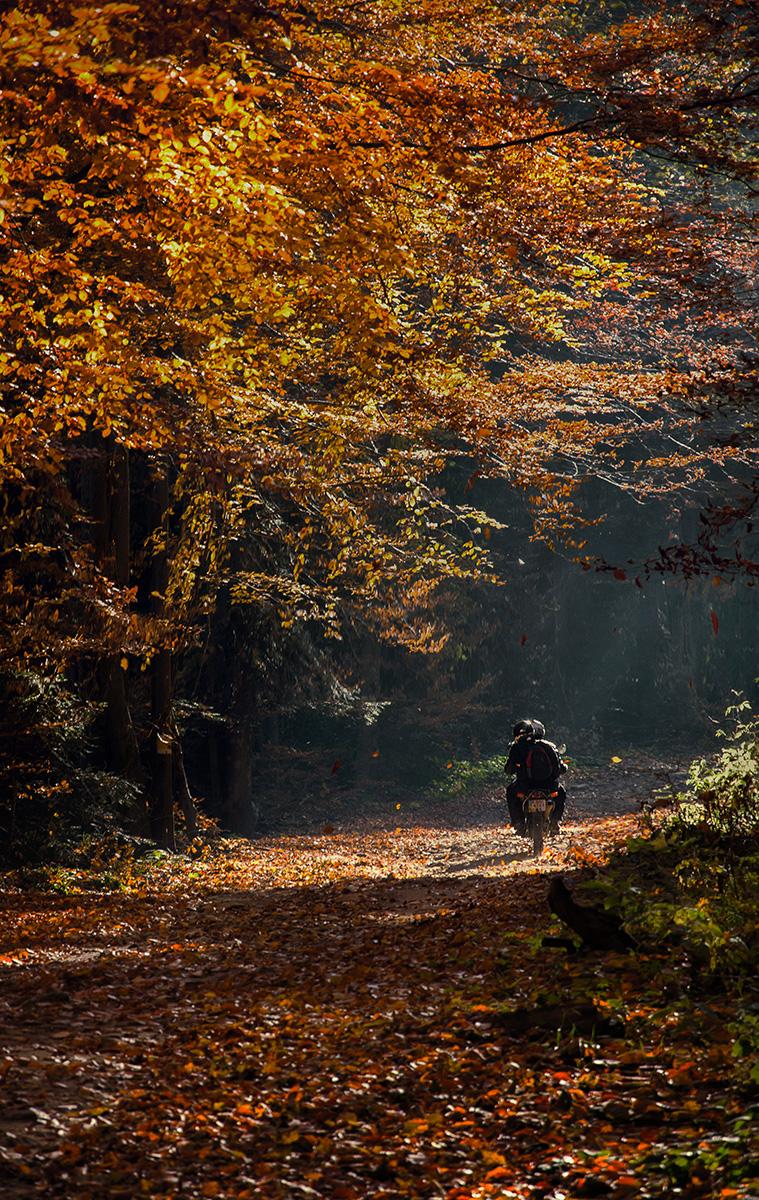 Крізь осінь