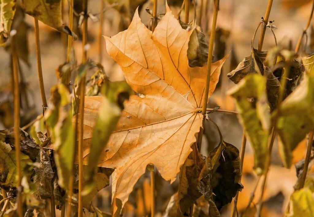 Краб вже старий... А от і осінь...