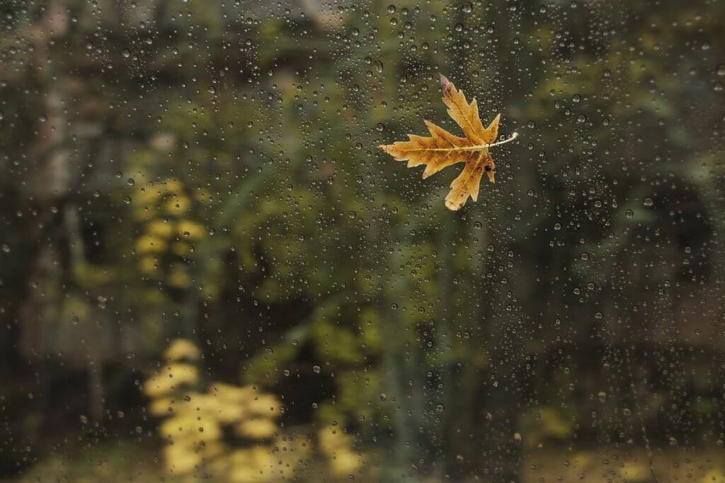 Осінь в Зоні