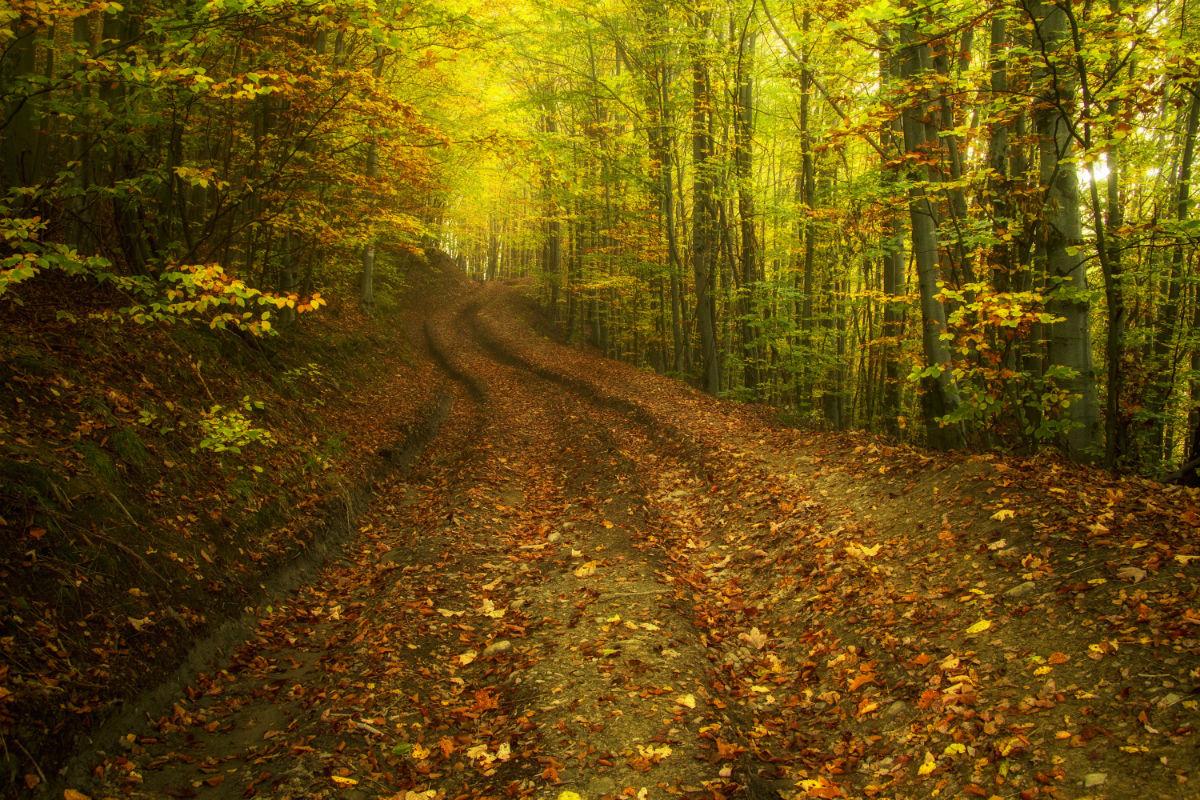 Дорога в осінь...