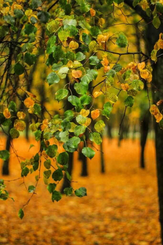 Колір осені