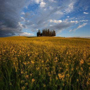 Квітуче поле. Фото Юрія Шевченка