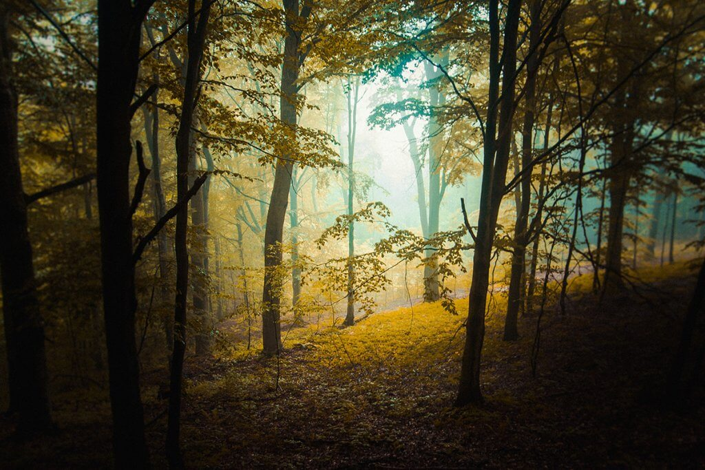 Хмара в лісі