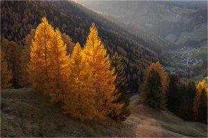 Осінь в горах. Автор Юрій Шевченко
