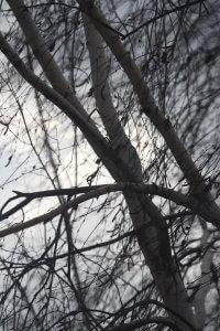 Береза. Вітер. Осінь