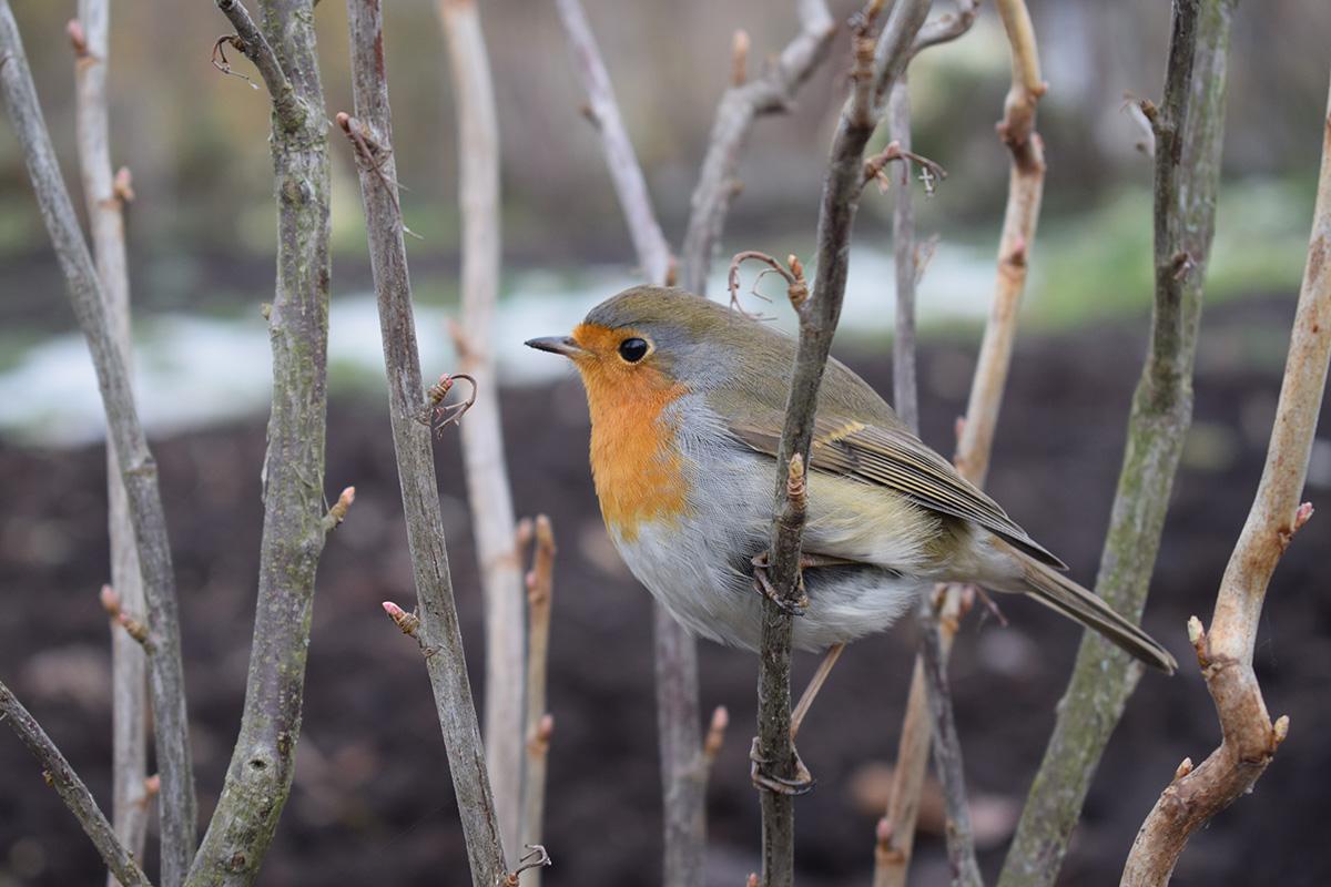 Пташка дачна барабашка