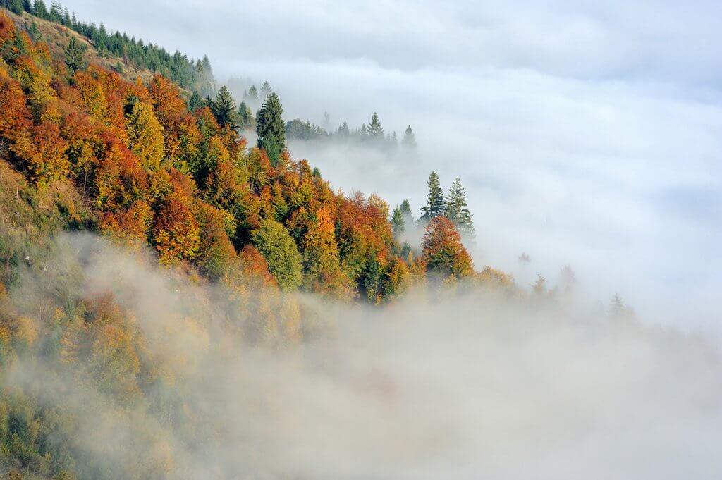 Там, де починаються тумани...