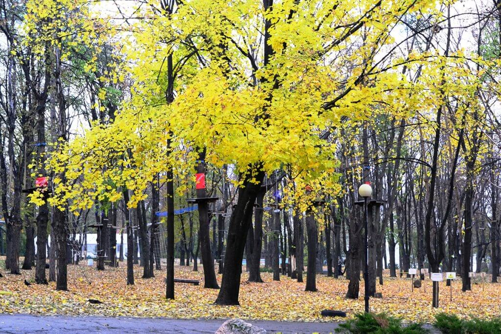 Тепла золота осінь ч.3