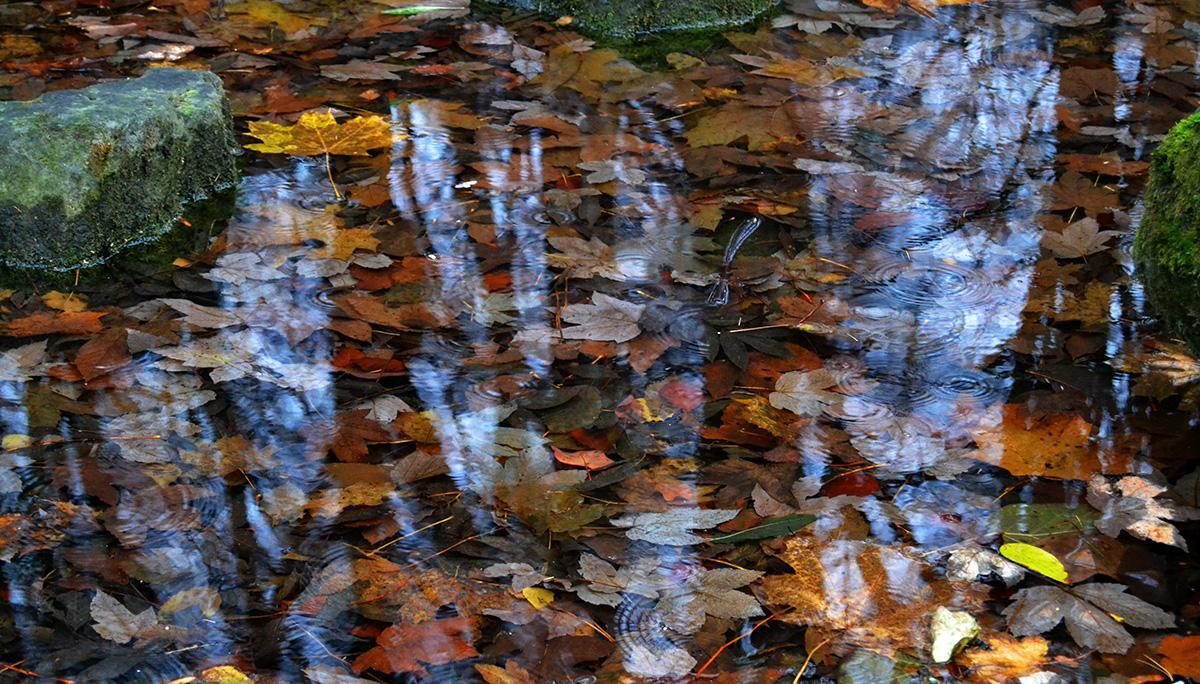 Осінь у Стрийському парку