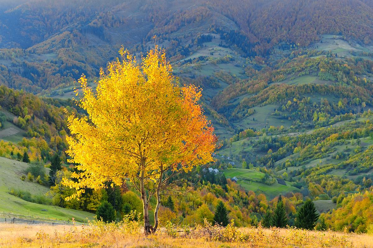 Зотола осінь
