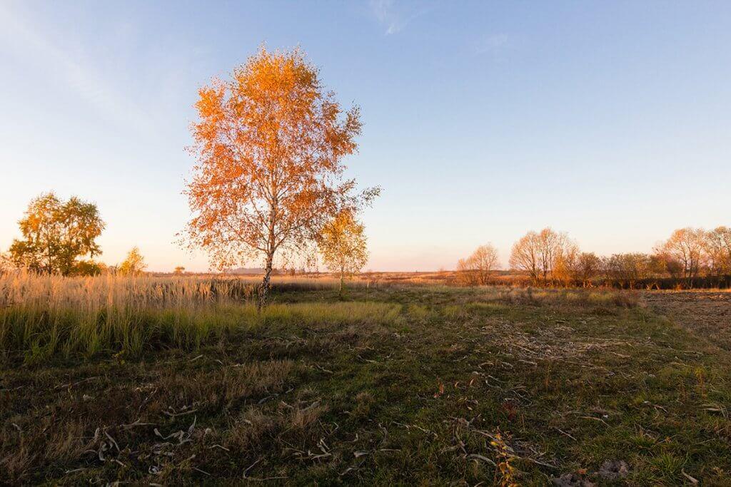 Яскравий листопад