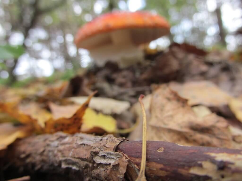 Осінні мешканці лісу