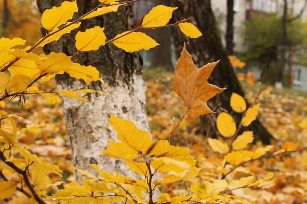Дотик осені