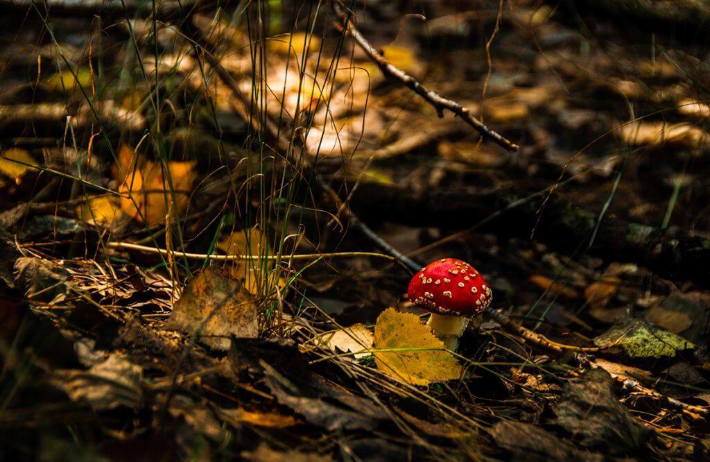 Клаптики осені