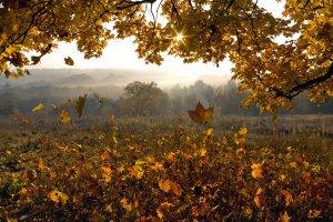 Ласкаво просимо у осінь