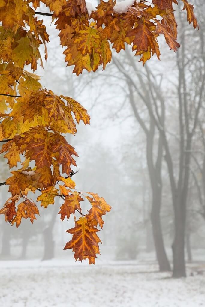 Сніжний жовтень