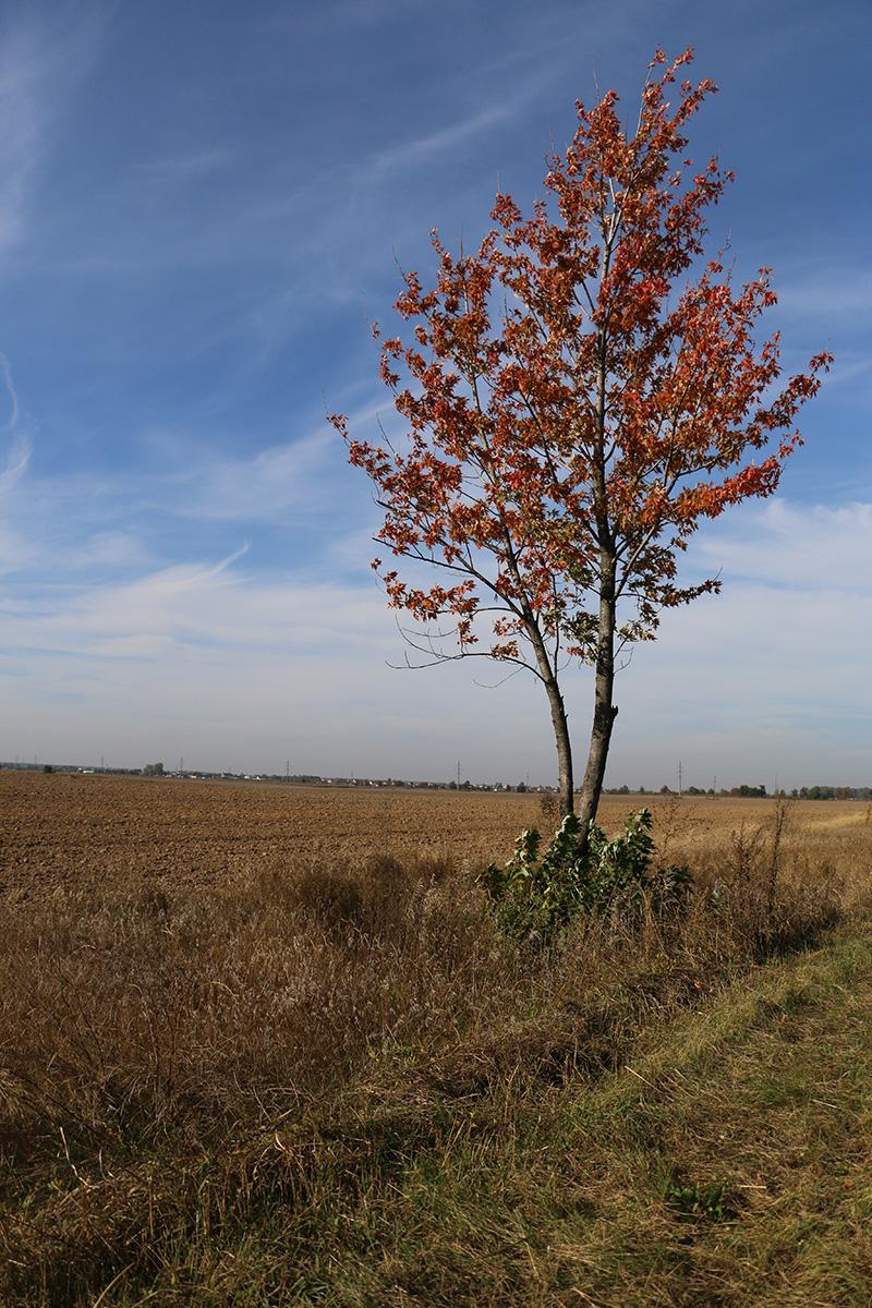 Деревце обабіч поля