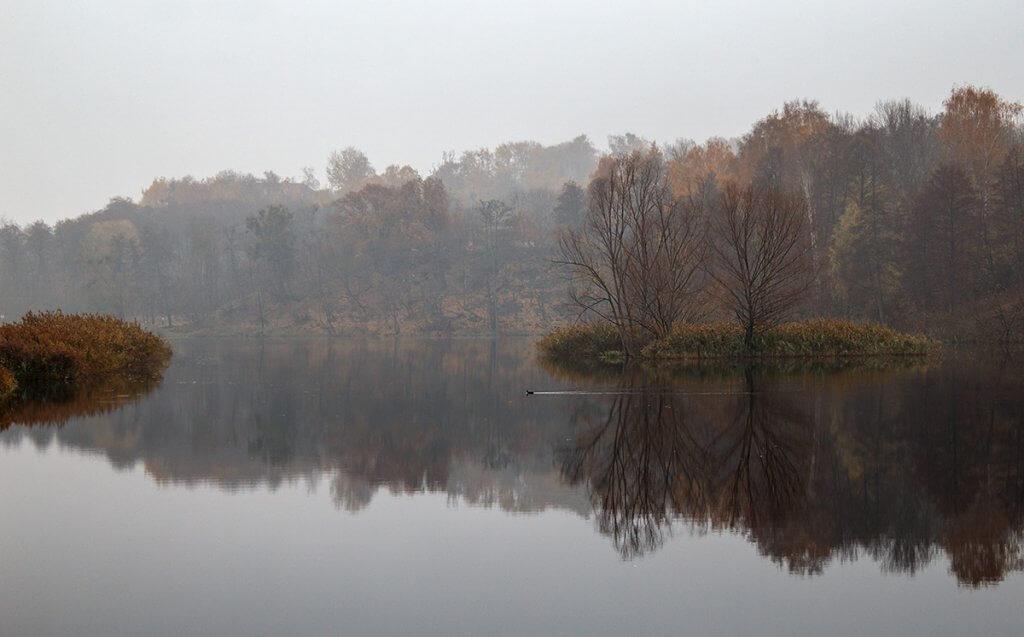 Пруд в тумані