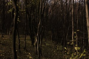 Осінній ліс спогадів