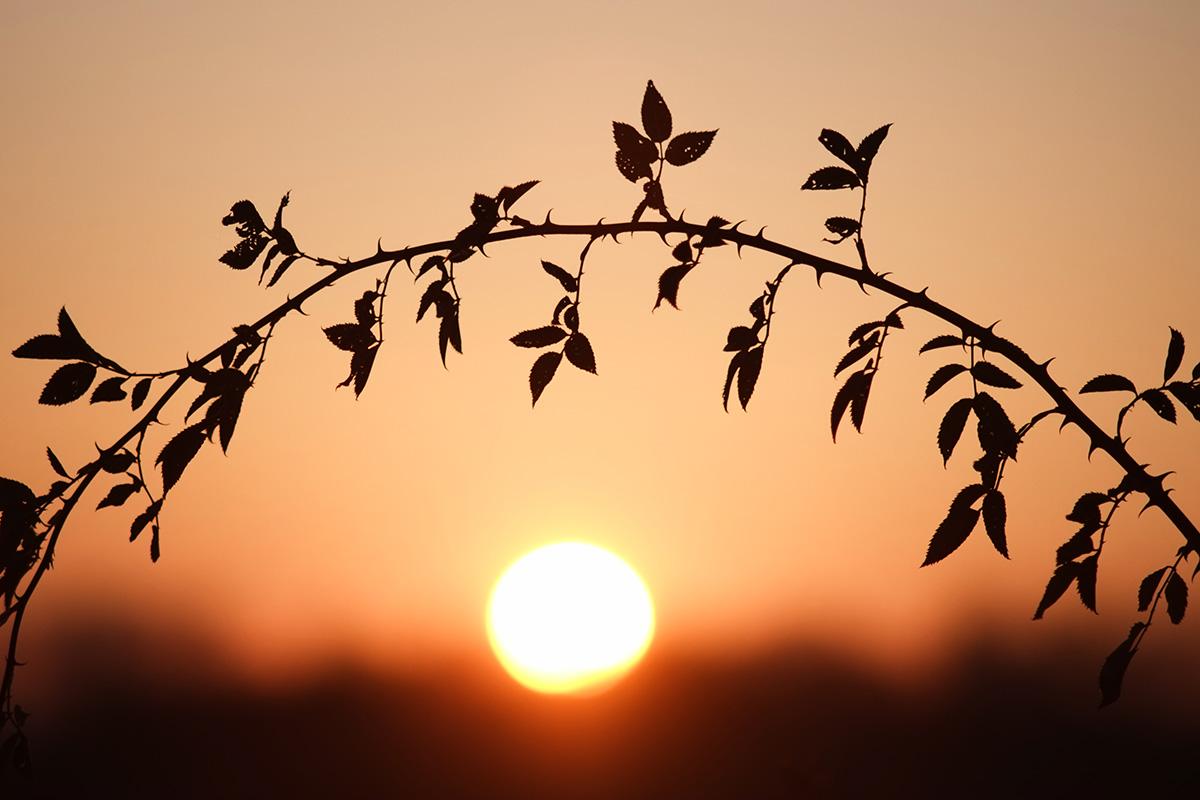 Вечірнє сонце, дякую за день