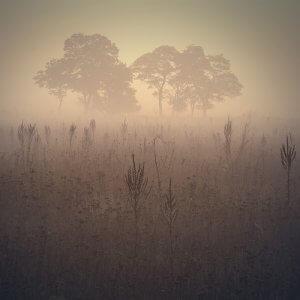 Ранок. Фото Віталія Башкатова