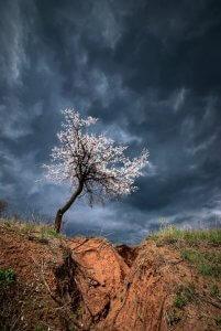 Дерево на фоні неба. Фото Віталія Башкатова