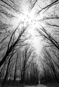 Чорно-біле фото лісу. Віталій Башкатов