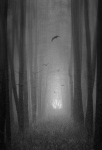 Птахи у лісі. Віталій Башкатов