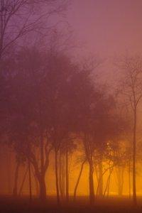 Дерева і туман. Дмитро Сіданченко