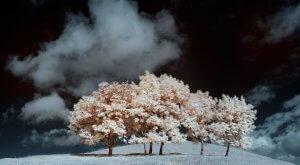 Зимова фотографія