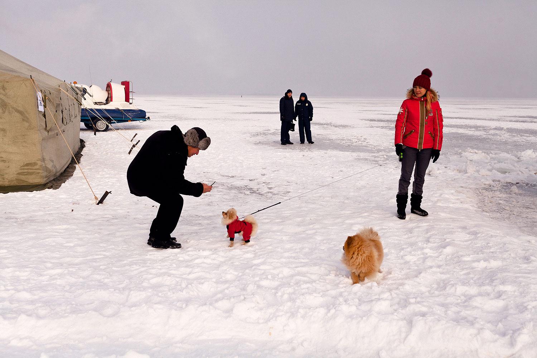 Собаки на снігу