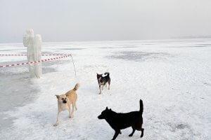 Собаки взимку
